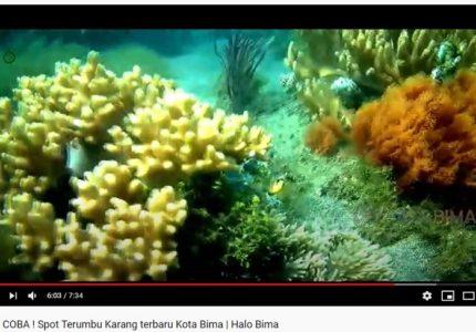Spot terumbu karang Kolo Kota Bima NTB