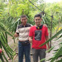 Kebun Buah Naga Desa Bre Destinasi Agrowisata di Kabupaten Bima